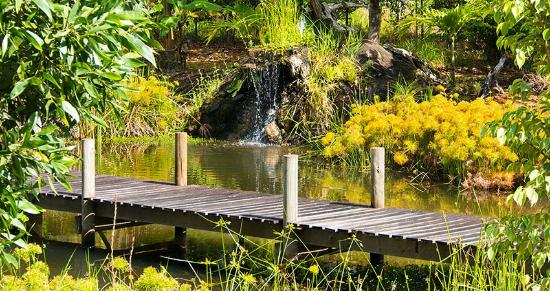 Lake on the grounds home to many frogs