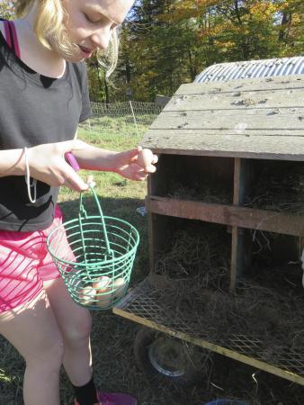 Green Mountain Girls Farm: Collecting eggs