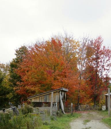 Green Mountain Girls Farm: Fall GMGF