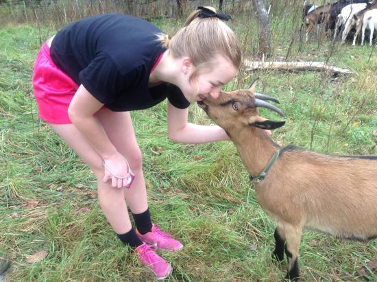 Green Mountain Girls Farm: Goat 'kiss'