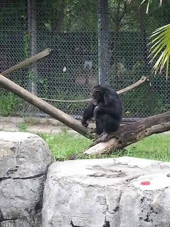 Splash (20) - Orangutang Boomerang / Sunday Ride