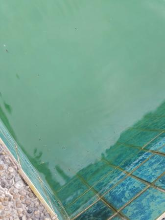 Shah's Beach Resort: The pool. It's green in color and the pool floor is not visible. You can even see dead bugs floa