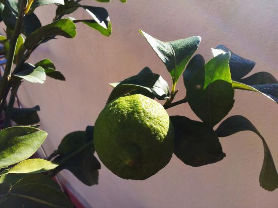Riad Jean Claude : des fruits gorgés de soleil