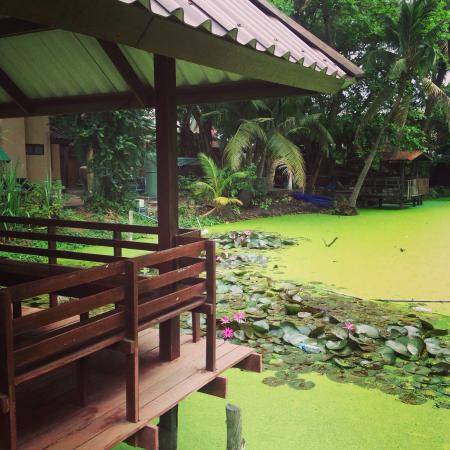 Baan Lotus Guest House : Vista del jardín