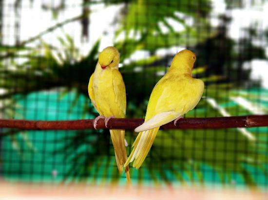 Bird Aviary (Islamabad) - 2019 All You Need to Know BEFORE