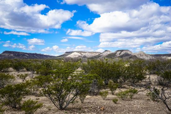 Alpine, TX: While the scenery may vary with your rock hunt, the whole area is isolated yet amazing.