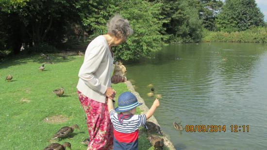 Weald & Downland Living Museum: Lovely mill pond
