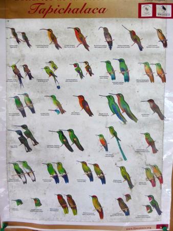 Zamora-Chinchipe Province, Ecuador: Bestimmungs-Poster der Kolibris in der Tapichalaca-Region