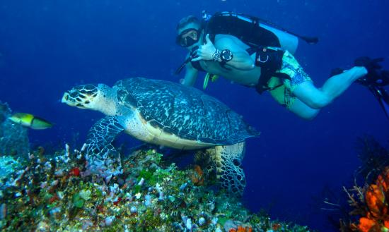 Scuba Fred's: Turtle Encounter
