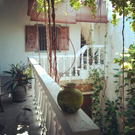 Shoba Traveller's Tree: Patio