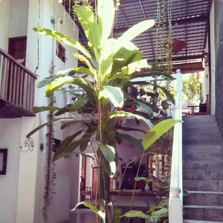 Traveller's Tree: Patio
