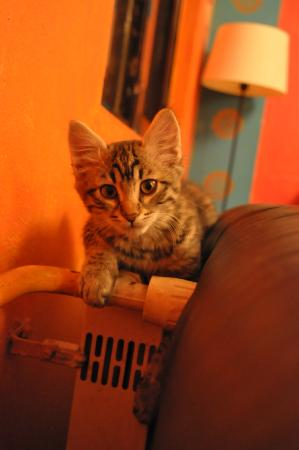Stray Cat Hostel: Henry Pasa :)