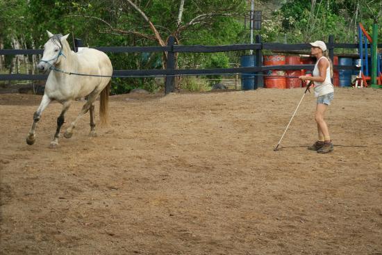 Establo San Rafael B&B: Natural Horsemanship in der Arena