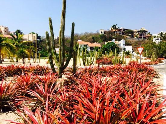 Villa Sol y Mar : landscaping in the neighborhood
