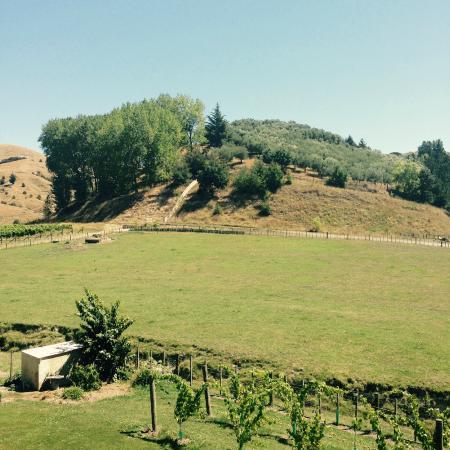 Kiwiesque: Esy Valley view