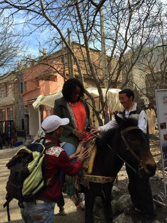Tours from Marrakech: Mule ride!