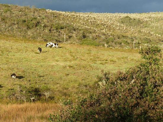 Carchi Province, Ecuador: Weiden im Übergang zum páramo
