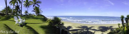 Cabarete East Beachfront Resort: Plenty of natural shade to enjoy the view