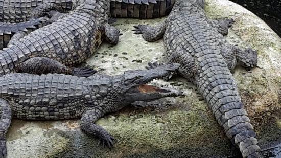 Planete Crocodiles