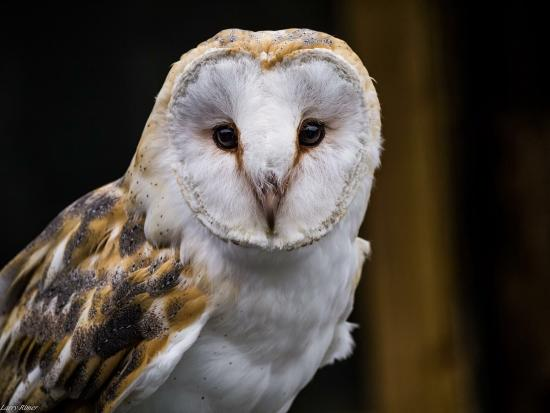Kilmacthomas, Ireland: Meet, feed and fly these amazing raptors.