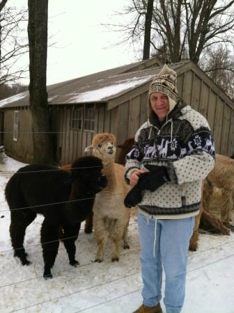 Chimney Hill Estate & Ol' Barn Inn: Feeding the Alpacas and Llamas