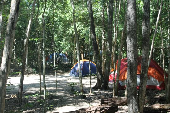 Campamento YAAX'CHE