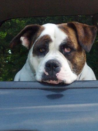 American Bulldog Coffee Roasters Yes There Is A Delilah