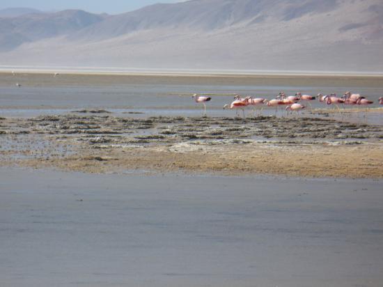 Belen, อาร์เจนตินา: laguna blanca
