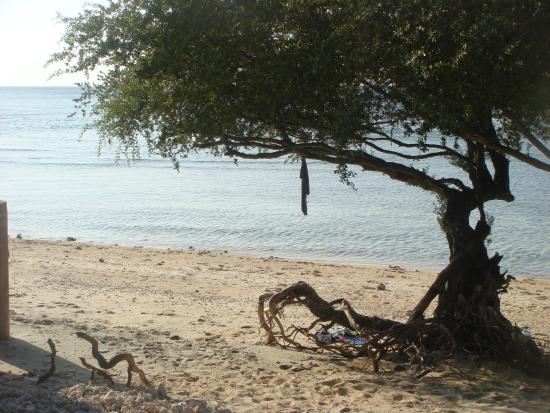 Alam Gili: Beach in front of the hotel