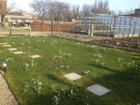 Villa Augustus : Sneeuwklokjes in de tuin.