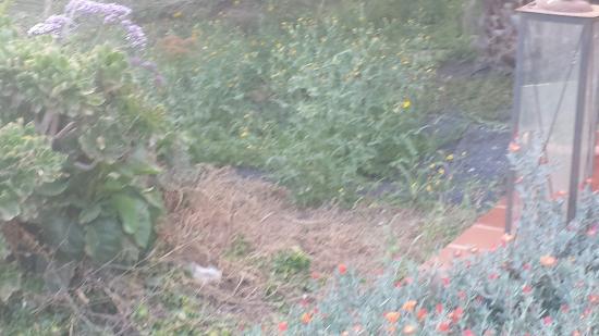 El Patio de Lajares: jardín