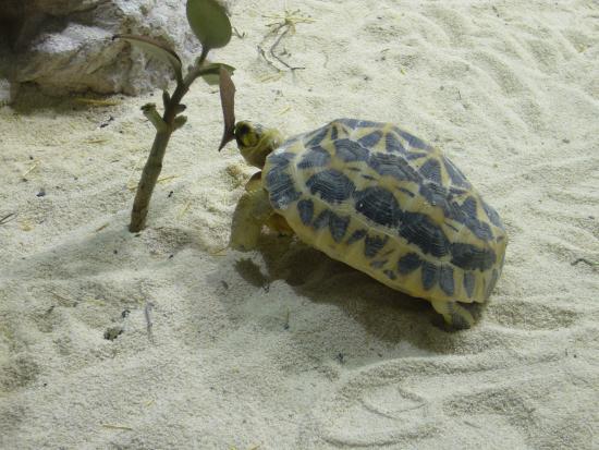 Tartaruga di terra foto di acquario di genova genova for Tartaruga da acquario