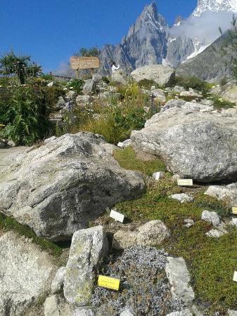 Saussure Garden: 3