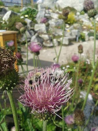 Saussure Garden: 2
