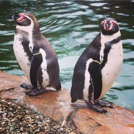 Krefeld Zoo: Penguins up close and personal