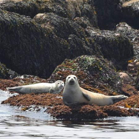 Island Cruises : Seals shot from the afternoon nature cruise.