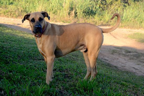 Finca Buena Vista: Balu der Hotel-Hund (sehr, sehr lieb!)