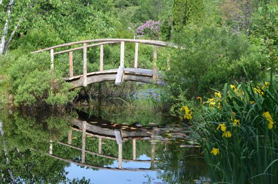 St. Joseph Island, Canada: This rustic bridge over the ponds is a great to feed the turtles and watch the frogs.