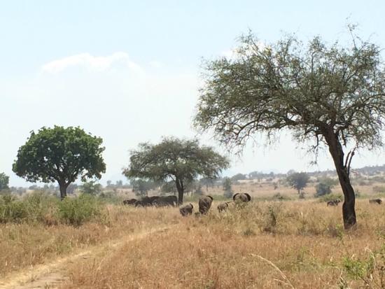 Nga'Moru Wilderness Camp : 3 km from the camp