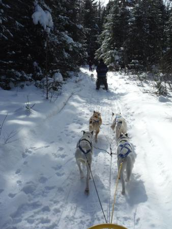 Fortune's Madawaska Valley Inn : Nearby dog sledding fun