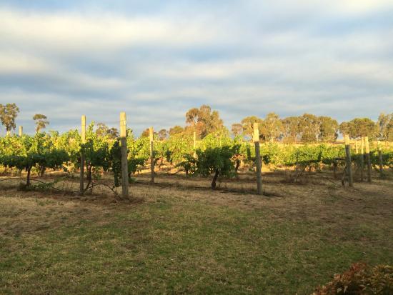 De'Vine Escape: Sunset in the Vines.