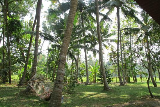 Palmy Lake Resort: Palmengarten