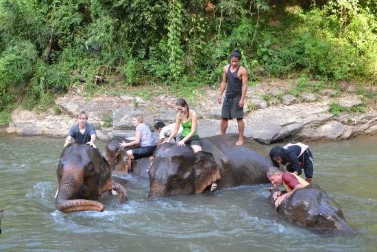 Next Step Thailand (Travel with Joe) Cycling and Hiking Private Day Tours : Washing the elephants