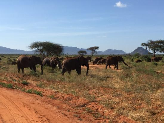 Национальный парк Малинди-Марине, Кения: Много слонов