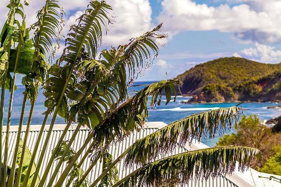 Residence Oceane Hotel : La vue et l'arbre du voyageur Résidence Océane Martinique Tartane