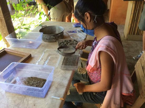 Puerto Vallarta Walking Tours: Seed Sorting