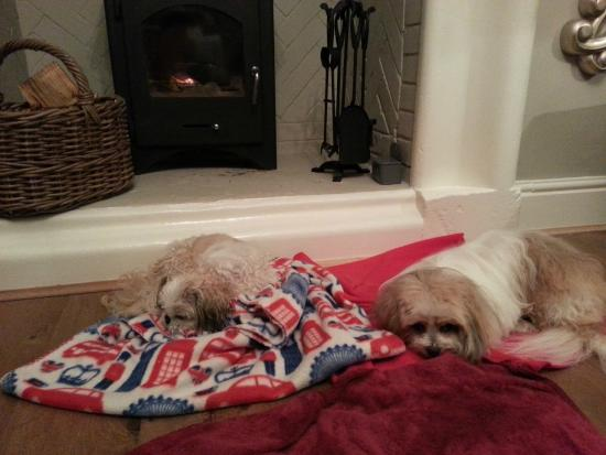 The Lodge Inn: Wilco and Betty enjoying the wood burner after a walk on the beach!
