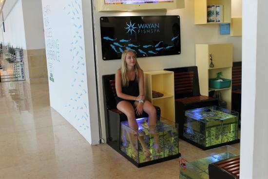 Cancun getting a fish pedicure picture of fish spa for Garra rufa fish pedicure locations
