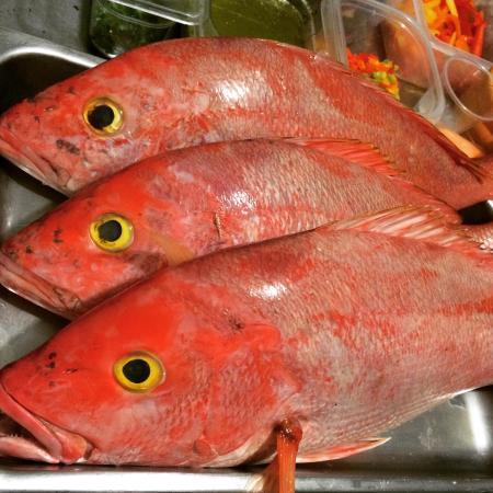 Siempre Pesca Fresca Chillo De Ojo Amarillo Picture Of