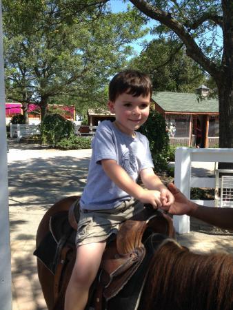 White Post Farms: Pony rides